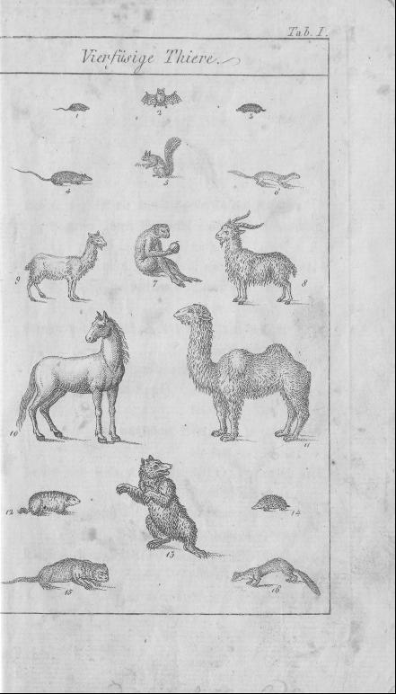 HisBest_derivate_00002807/Naturhistorisches_Bilder-und_Lese-Buch_0021.tif
