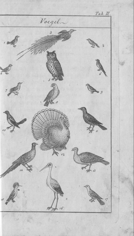 HisBest_derivate_00002807/Naturhistorisches_Bilder-und_Lese-Buch_0027.tif