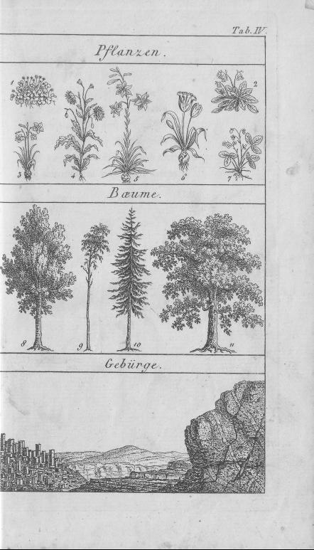 HisBest_derivate_00002807/Naturhistorisches_Bilder-und_Lese-Buch_0035.tif