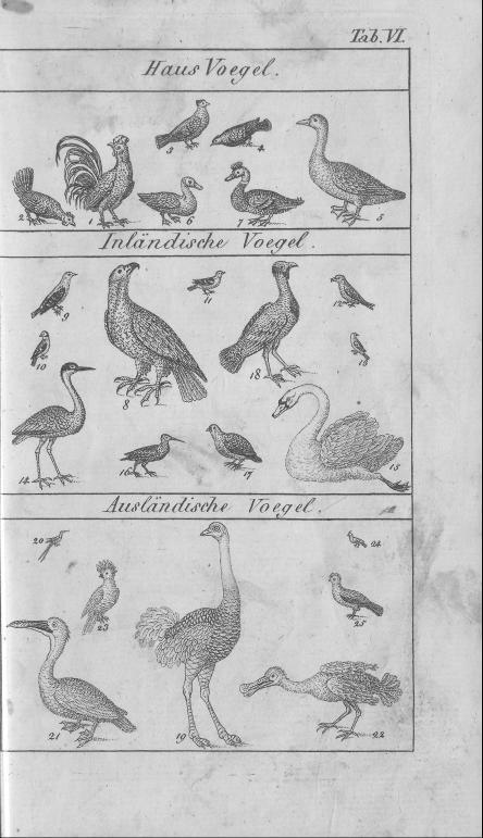 HisBest_derivate_00002807/Naturhistorisches_Bilder-und_Lese-Buch_0043.tif