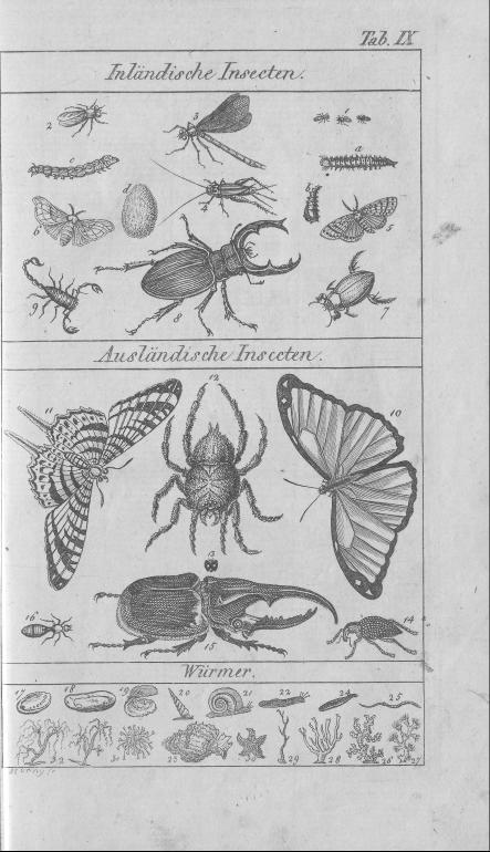 HisBest_derivate_00002807/Naturhistorisches_Bilder-und_Lese-Buch_0055.tif