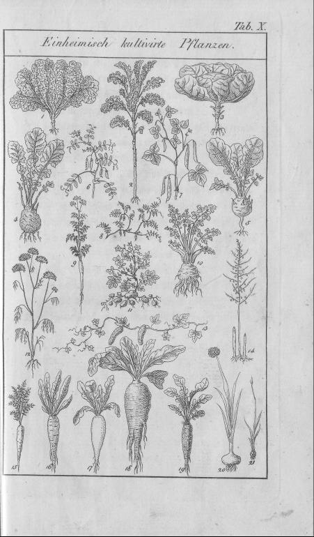 HisBest_derivate_00002807/Naturhistorisches_Bilder-und_Lese-Buch_0061.tif