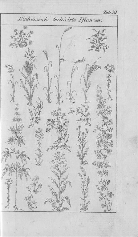 HisBest_derivate_00002807/Naturhistorisches_Bilder-und_Lese-Buch_0065.tif