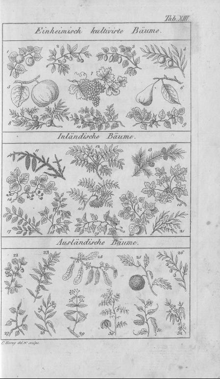 HisBest_derivate_00002807/Naturhistorisches_Bilder-und_Lese-Buch_0073.tif